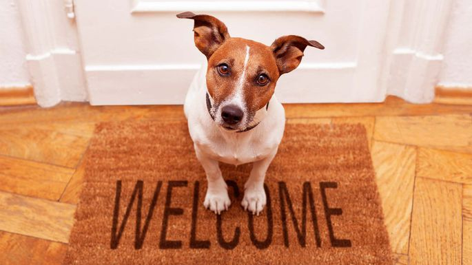 No Surprise Pet Friendly Homes Are in High Demand